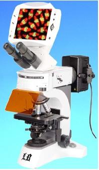 Kính hiển vi sinh học kỹ thuật số huỳnh quang với hệ thống quang học vô cực (5,0mp)