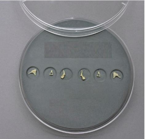 Xương con dùng trong phẫu thuật tạo hình màng nhĩ
